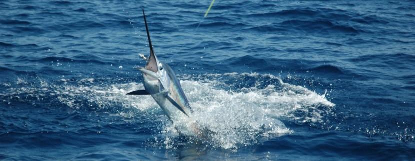Offshore World Championship to be held at Marina Pez Vela in Quepos near Manuel Antonio, Costa Rica