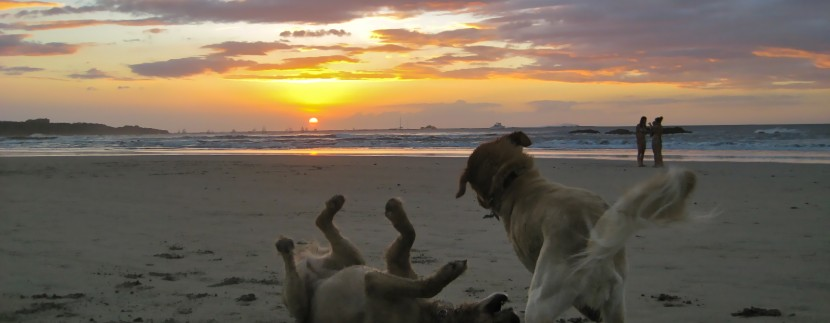 Traveling with Your Pet in Costa Rica