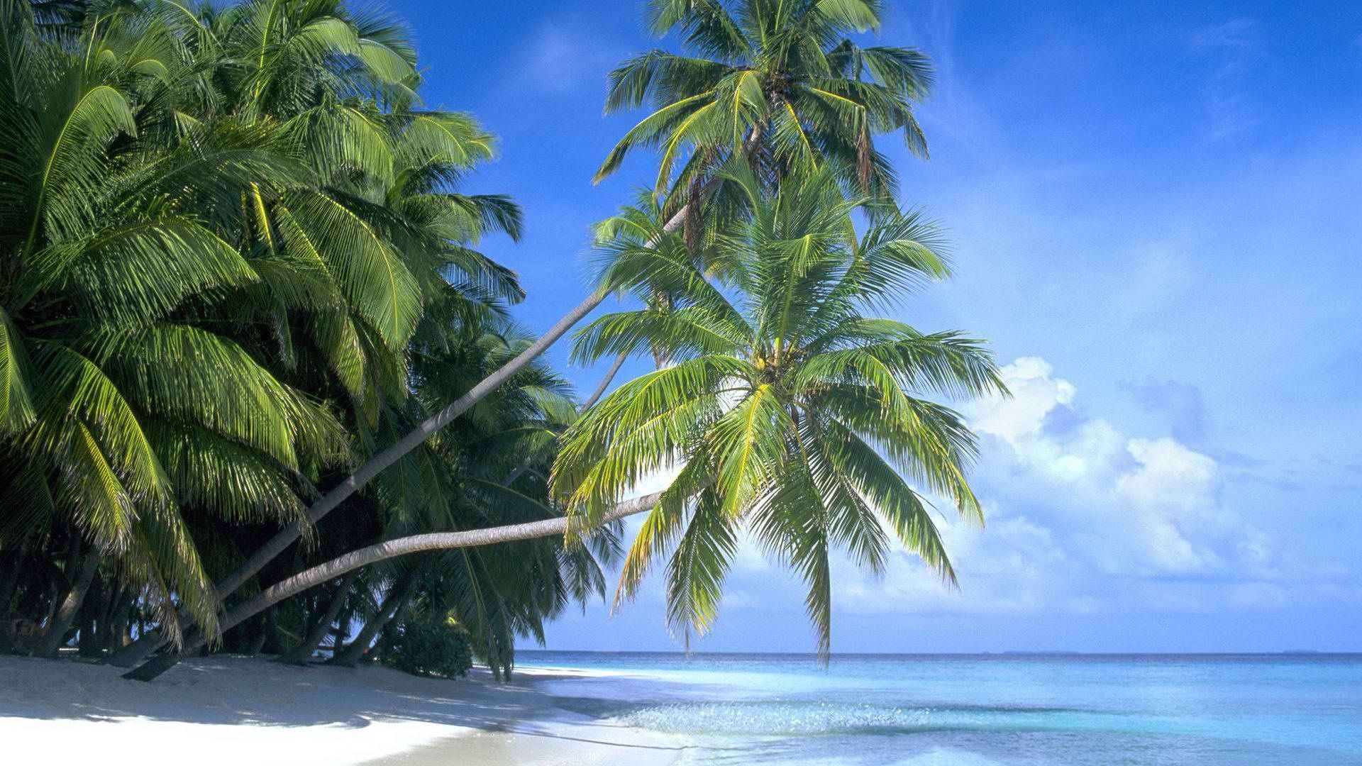 Beach Palm Tree Wide Wallpapers Car Pictures Trees Beach Wallpaper Uk  Wallpapers Hd Cole And Son Download Free For Desktop By Contour Next John  Lewis