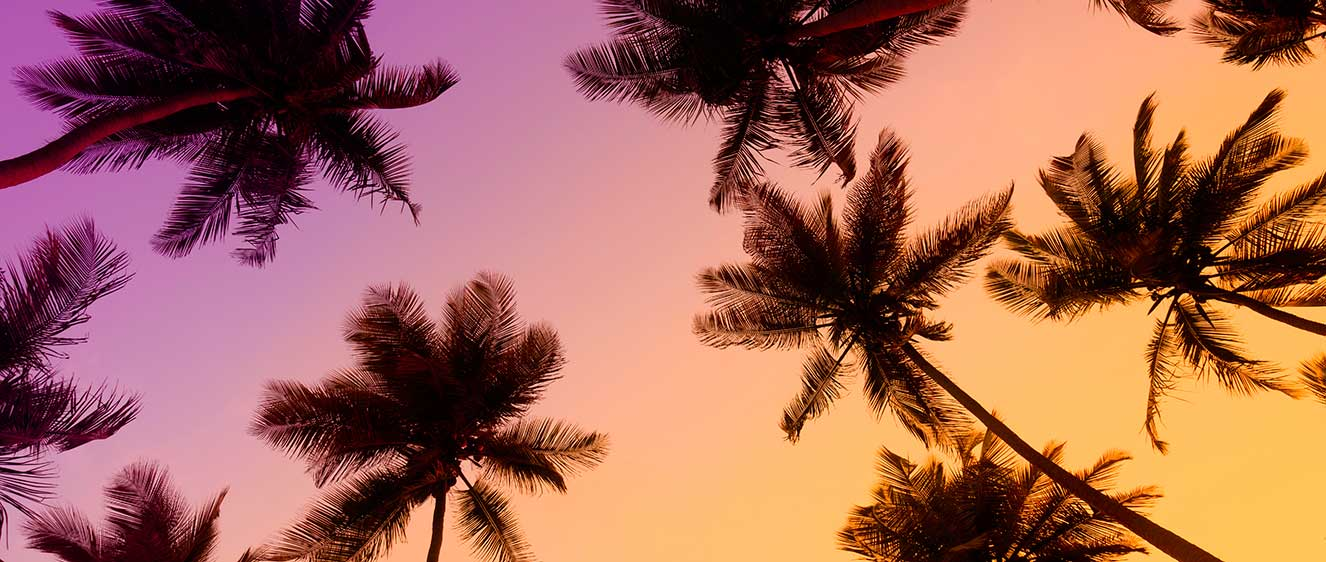 Palms Home 3