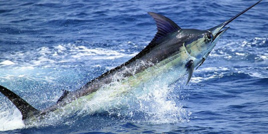 sportfishing in costa rica