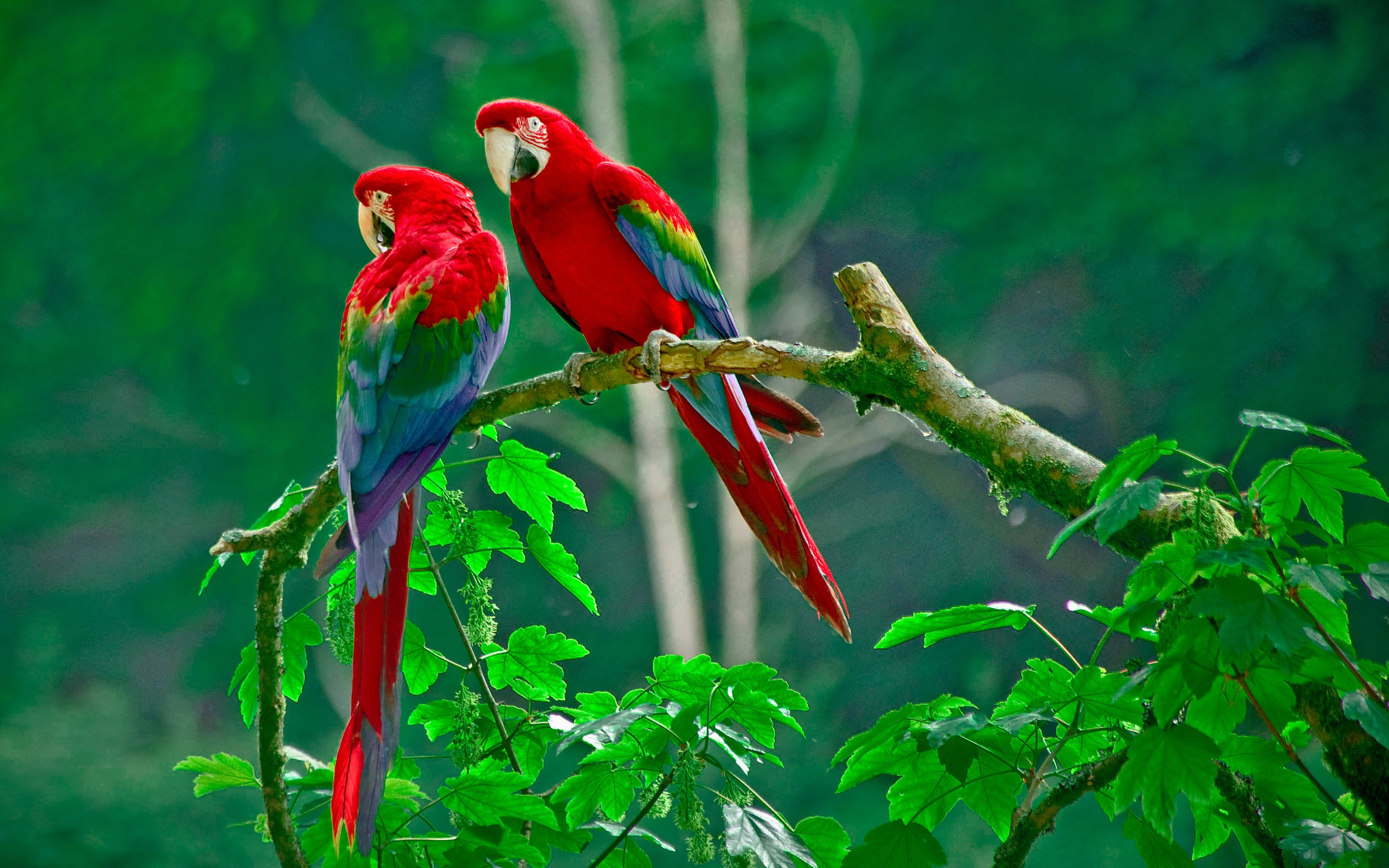 Scarlet Macaw Parrots New Hd Wallpapers Free Downlaod Birds Pictures Costa Rica Real Estate