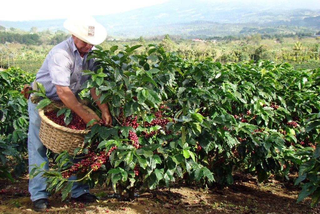 coffee in costa rica