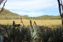 land-for-sale-in-tamarindo-costa-rica