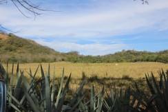 landscape-at-farm-for-sale-in-tamarindo