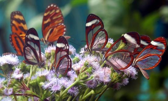 Costa-Rica-Animals-Wildlife1