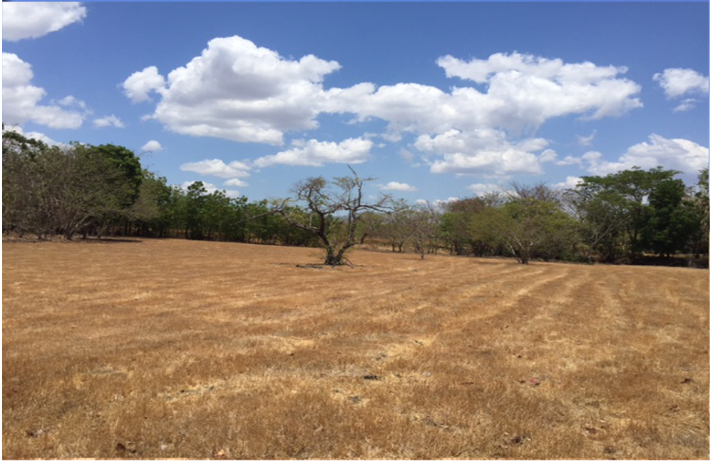 Hacienda Pinilla – Beautiful lot in Las Golondrinas 42- One of the largest lots in the area.